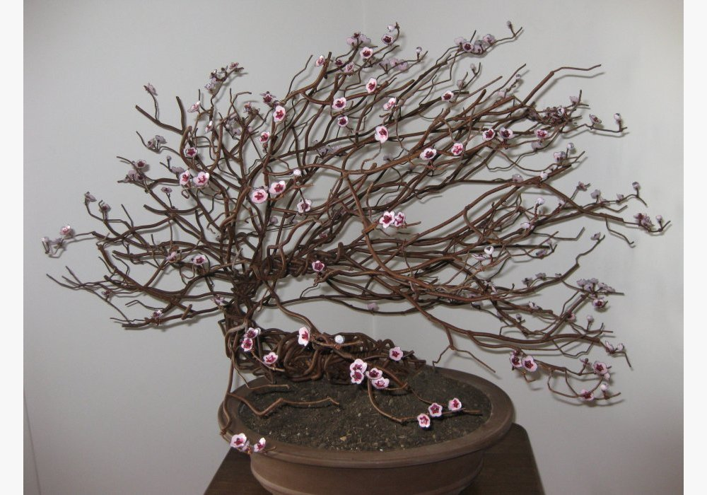 Bonsai Mei Hua